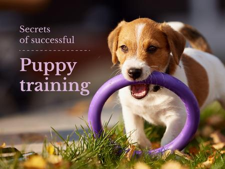 Plantilla de diseño de Secrets of successful puppy training Presentation