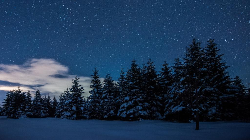 Snowy Forest at starry Winter night — Maak een ontwerp