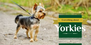 Everything about Yorkies banner