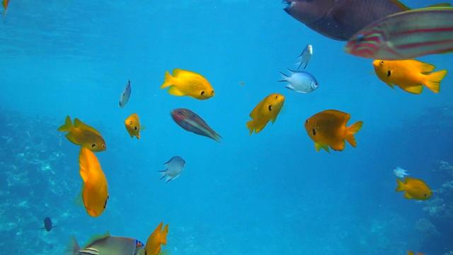 Fish and Corals Underwater Zoom Backgroundデザインテンプレート