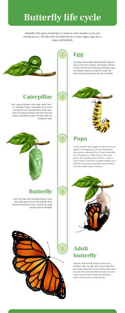 Plantilla de diseño de Process infographics about Butterfly life cycle Infographic