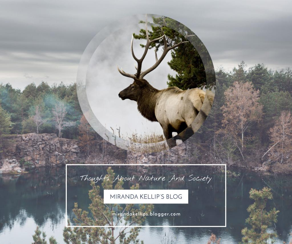 Eco Blog ad with Wild Deer — Create a Design
