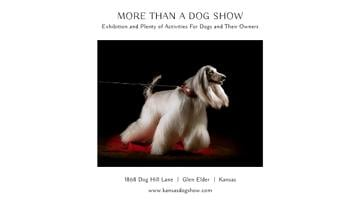 Dog Show announcement with pedigree pet