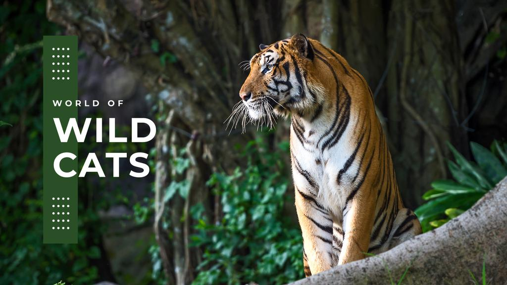 World of wild cats — Modelo de projeto