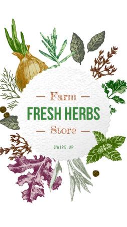 Farm Natural Herbs Frame Instagram Story Tasarım Şablonu