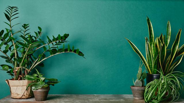 Plantilla de diseño de Potted Flowers near green Wall Zoom Background