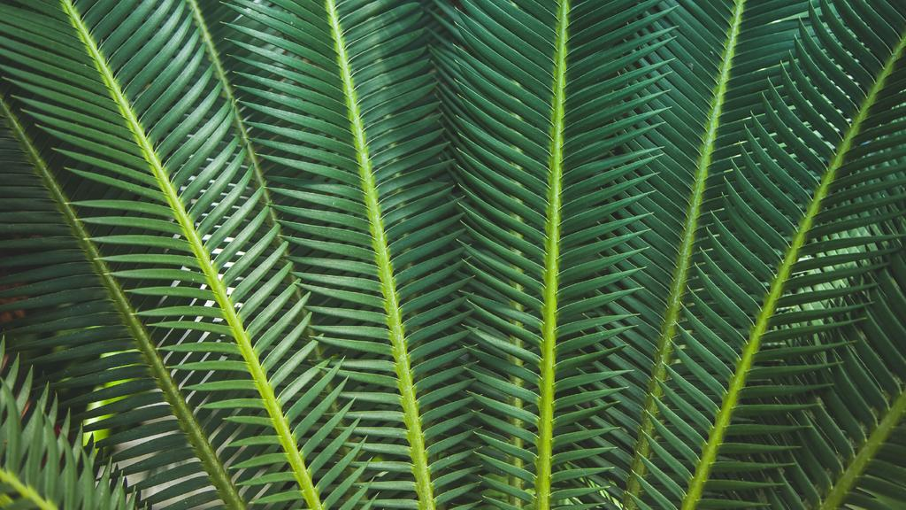 Tropical green branches — ein Design erstellen