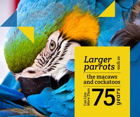 Modèle de visuel Exotic Birds guide Blue Macaw Parrot - Facebook