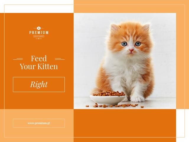 Designvorlage Feed your kitten right für Presentation