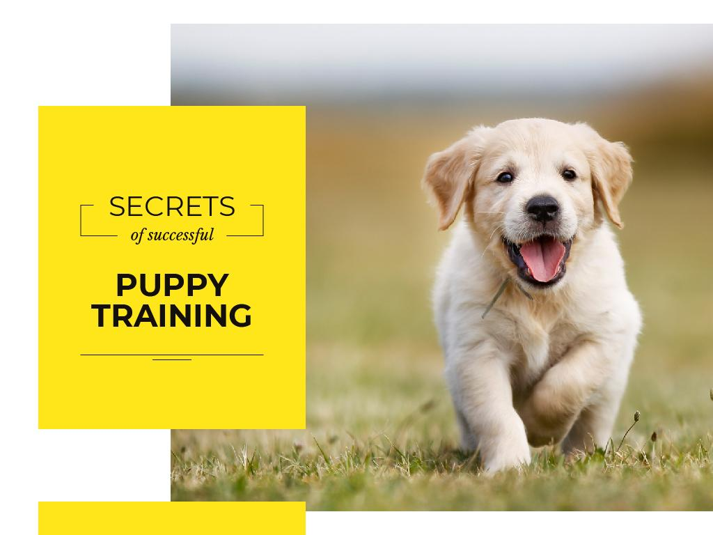 secrets of successful puppy training — Создать дизайн