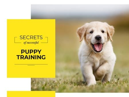 Designvorlage Secrets of successful puppy training für Presentation