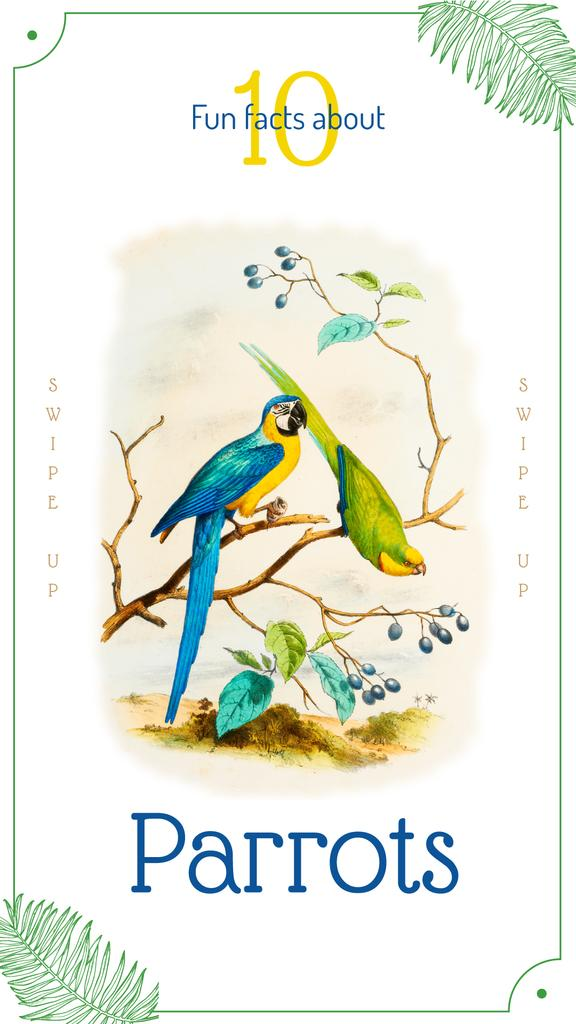 Parrot birds on a tree — Crear un diseño