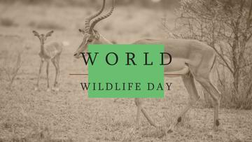 World Wildlife Day Antelope in Natural Habitat | Youtube Channel Art