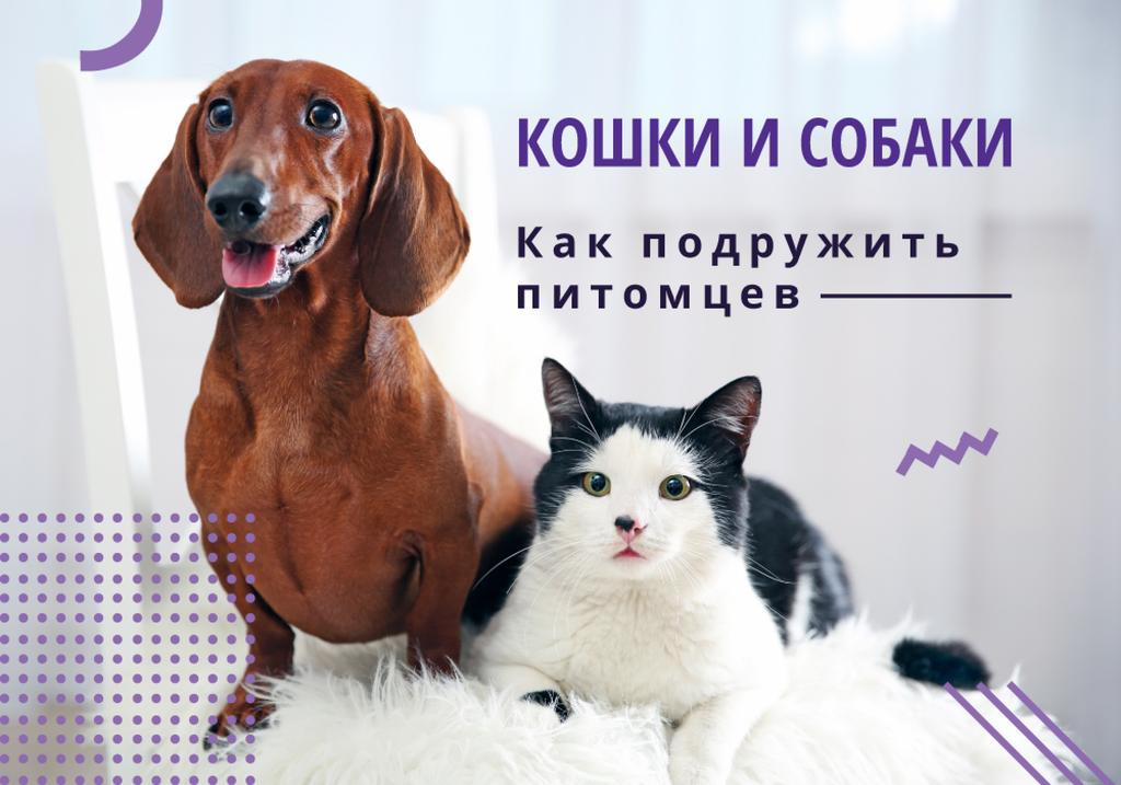 Caring About Pets with Dachshund and Cat — Створити дизайн