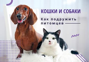 Caring About Pets Dachshund and Cat | VK Universal Post
