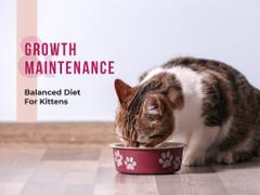 Cute cat eating from bowl on floor