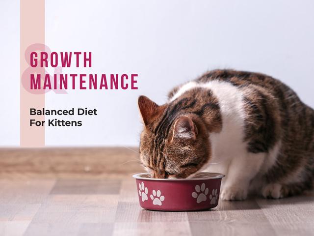 Cute cat eating from bowl on floor Presentation Modelo de Design