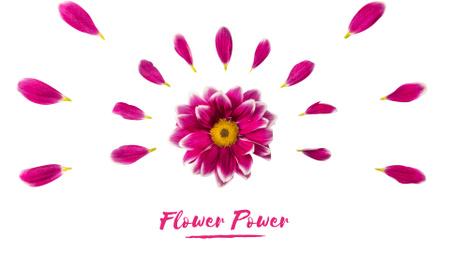 Plantilla de diseño de Purple daisy flower with petals Full HD video