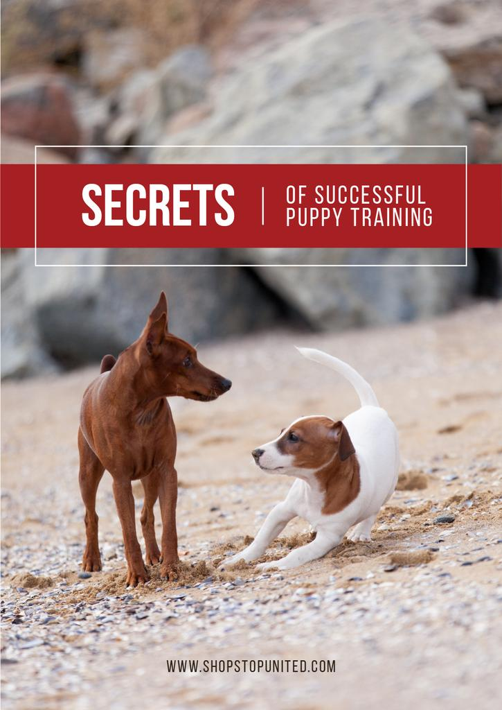 Secrets of puppy training — Create a Design