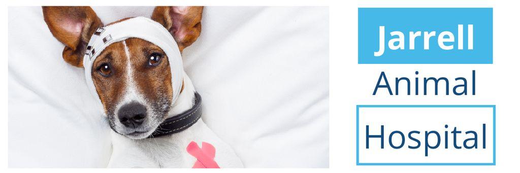 Dog in Animal Hospital — Создать дизайн