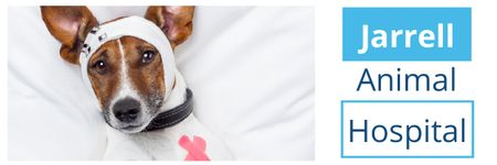 Dog in Animal Hospital Email header Modelo de Design