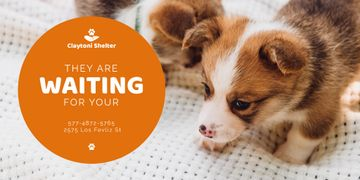 Animal Shelter Promotion Cute Puppies