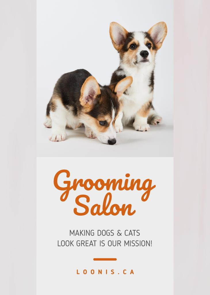 Grooming Salon Ad Cute Corgi Puppies — Створити дизайн