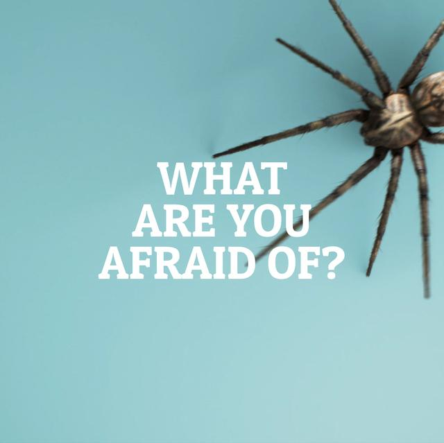 Spider creeping on blue background Animated Post – шаблон для дизайна