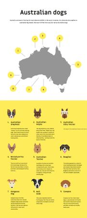 Informational infographics about Australian dogs Infographicデザインテンプレート