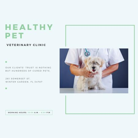 Veterinarian holding Puppy in Clinic Instagram – шаблон для дизайну