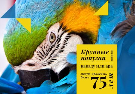 Exotic Birds Guide with Blue Ara Parrot VK Universal Post Tasarım Şablonu