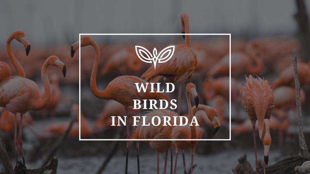 Wild Flamingo Birds in Habitat — Modelo de projeto