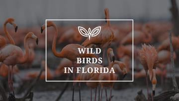 Wild birds in Florida
