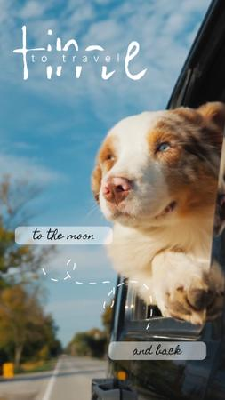Template di design Travelling with Pet Dog in Car TikTok Video
