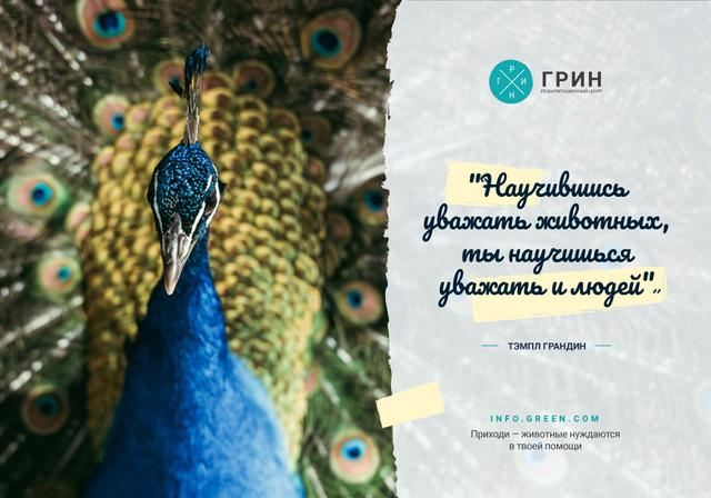 Animals Quote with Male Peacock Bird VK Universal Post Tasarım Şablonu