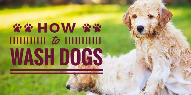 Washing Dogs Tips with Two Cute Puppies in Foam Twitter – шаблон для дизайна