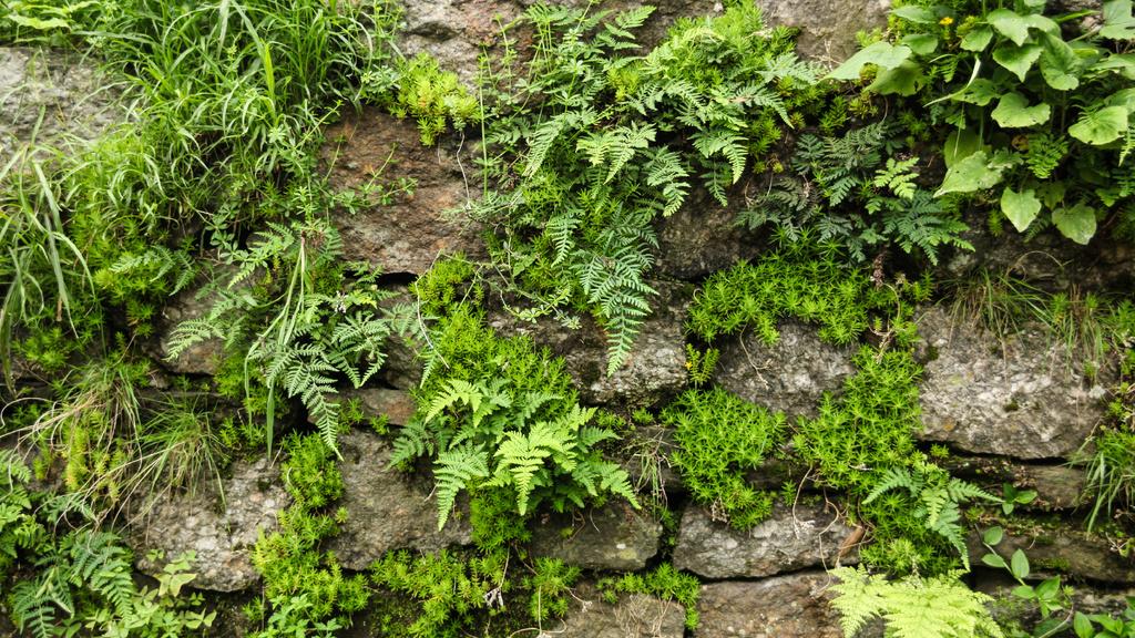 Old stones with fern greens — Modelo de projeto