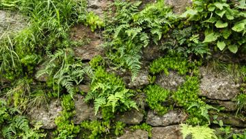 Old stones with fern greens