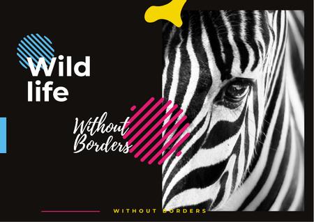 Wild zebra animal Postcard Tasarım Şablonu