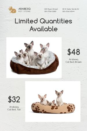 Pet Shop Offer with Cats Resting in Bed Pinterest – шаблон для дизайну