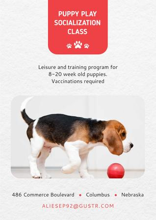 Modèle de visuel Puppy playing socialization class - Poster