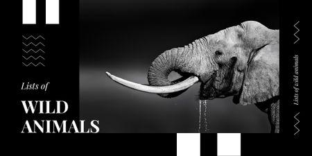 Designvorlage Wild elephant portrait für Image