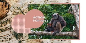 Chimpanzees in Natural Habitat