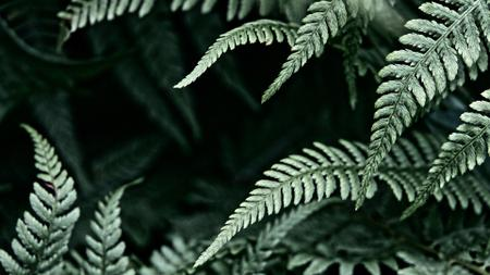 Green fern Leaves frame Zoom Background Design Template
