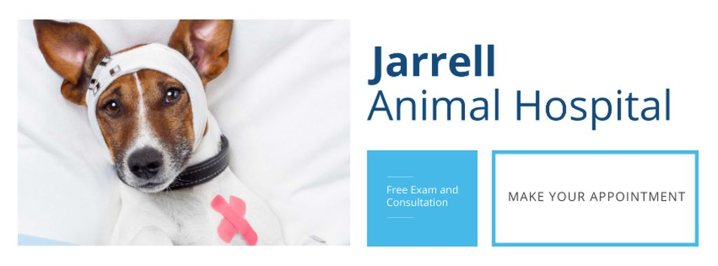 Dog in Animal Hospital — Crear un diseño