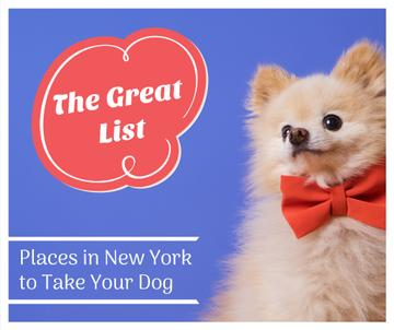 Pet Friendly Places in New York with cute Dog