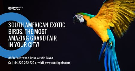 South American exotic birds shop Facebook AD – шаблон для дизайну