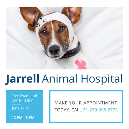 Template di design Animal Hospital Ad with Cute injured Dog Instagram AD