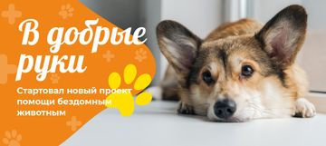 Pet Adoption Cute Dog Lying | VK Post with Button Template