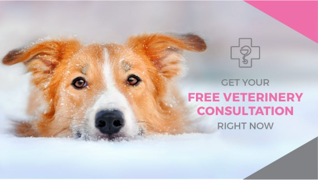Free veterinary consultation Offer — Create a Design
